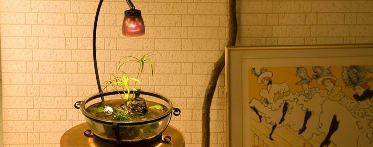 庭園メダカ鉢